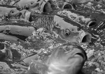 sprzedaz-zywych-ryb-w-torebkach